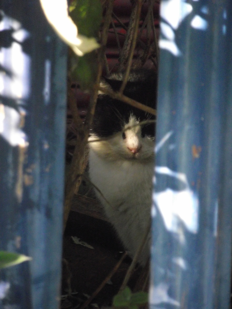 black and white cat, cute cat, cat hiding, cat liverpool
